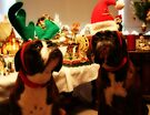 Do We Have To Wear These Silly Hats?  -Boxer Dogs Series- by Evita