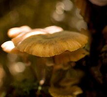 Shady Mushrooms by Erin Guest