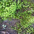 Lichen #2 by Virginia McGowan