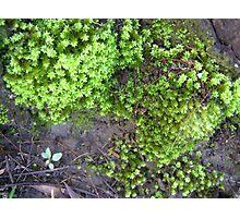 Lichen #2 Photographic Print