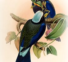 ILLUSTATION OF THE PURPLE WINGED ROLLER by marmur