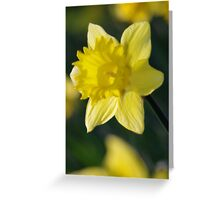 Daffodil 3 Greeting Card