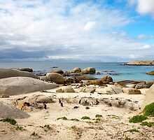 Boulders beach penguin colony by Rudi Venter