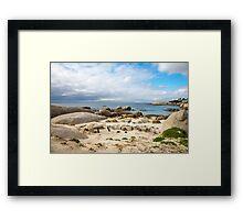 Boulders beach penguin colony Framed Print