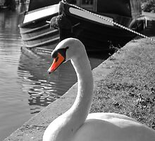 Canal Swan by Yhun Suarez