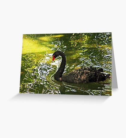 Black Swan, Forth Worth Zoo Greeting Card