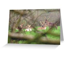 Wild Fallow bucks with Sika stag Greeting Card