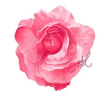 Pink Rose by jessicaferry