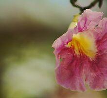 Danity by PhotosByLeila