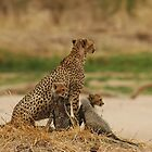cheetah with her cubs in Tanzania by Marieseyes