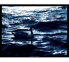 Midnight Elegance Photographic Print