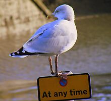 Cornwall: Oi, Can't You Read? - It's says no waiting at any time. by Rob Parsons