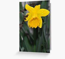 Yellow Spring Bloom Greeting Card
