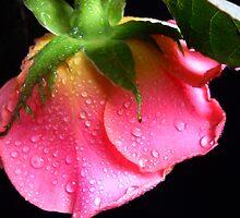 Pink Rose. by Vitta