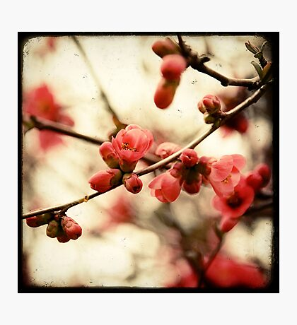 Red Blossom Photographic Print