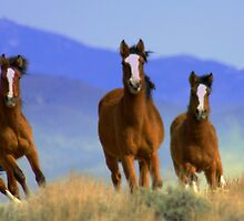 Three Amigos  by Jeanne  Nations