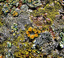 """""""Rock and Lichen Abstract"""" by DeeCarmack"""