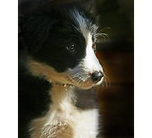 Tilly IV Photographic Print