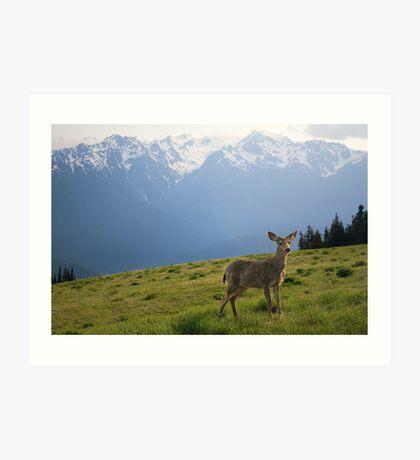Young Buck and Mt. Olympus Peaks at Hurricane Ridge Art Print
