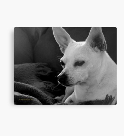 Lil' Bit~ Peace At Last~One Year Later Metal Print