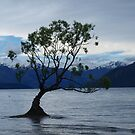 Lake Wanaka by Sarah Howarth [ Photography ]
