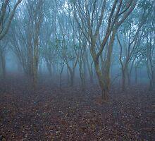 FOGGY FOREST MORNING by shamim