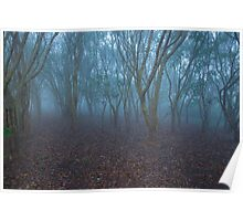 FOGGY FOREST MORNING Poster