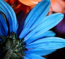 Blue & Orange Daisies by Gretchen Dunham