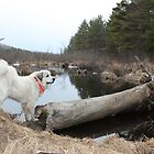 The Dog and the Log. by pics4me