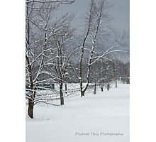 Snow Soldiers Photographic Print