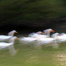 Ducks by Kitsmumma