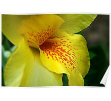 Spotted Yellow Flower Poster