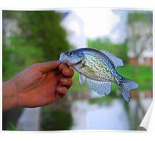 Laurel Lakes pet fish Poster
