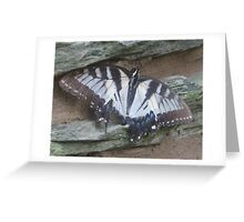 Broken Wings Greeting Card