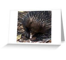 Echidna Crawl Greeting Card