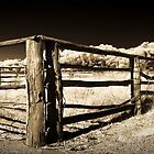 Stockyards ~ York, WA by Pene Stevens