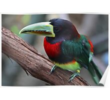 i am not toucan sam Poster