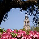 LSU in the Spring by alliegator