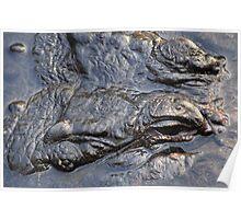 Gator head close up Poster
