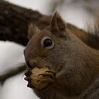 Crushed nuts 2 by Sean McConnery
