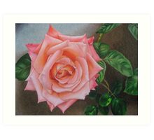 Satin pink rose Art Print