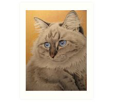 Baby blue eyes Art Print