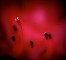 inside azalea by NEmens