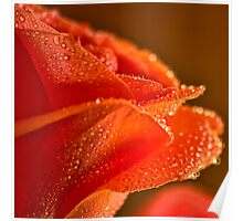 Raindrops on Salmon Rose Poster