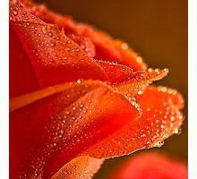 Raindrops on Salmon Rose Photographic Print