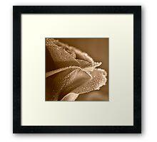 Raindrops on Sepia Rose Framed Print