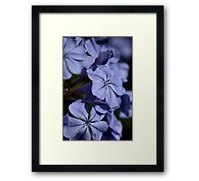 Turned Blue Framed Print