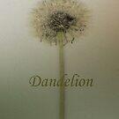 Dandelion  by Jing3011