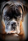 Go Ahead .... Make My Day  ~ Boxer Dogs Series ~ by Evita
