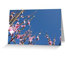 Peach tree reaching up Greeting Card